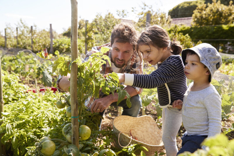 Family farming vegetables together