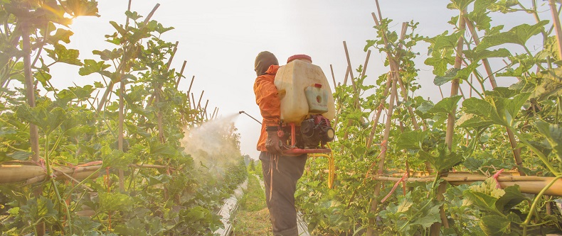 Spraying Pesticide in a Crop